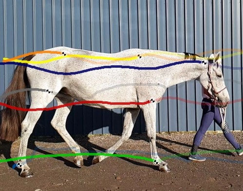 Equine Gait and Conformation Analysis