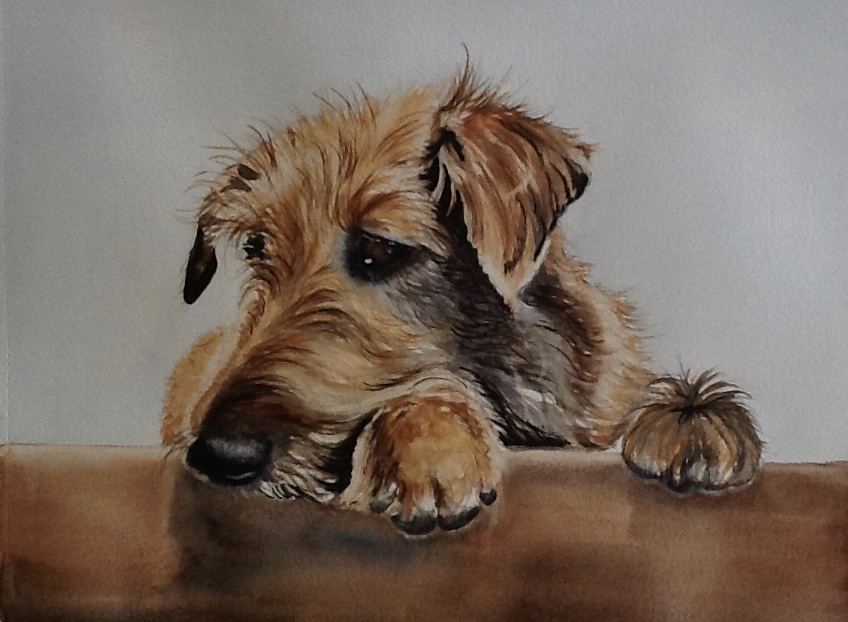Cute watercolour portrait painting of a tan terrier