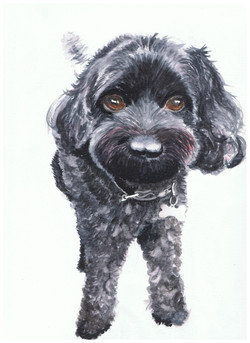 Cute watercolour portrait painting of a fluffy black dog.