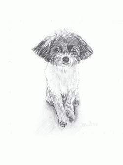 Pencil drawing of a small cute dog.