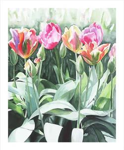 Charlecote Park Tulips