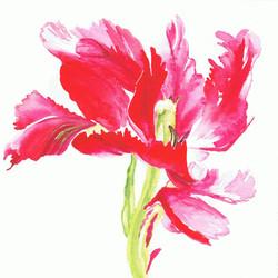 Shugborough Tulip 2