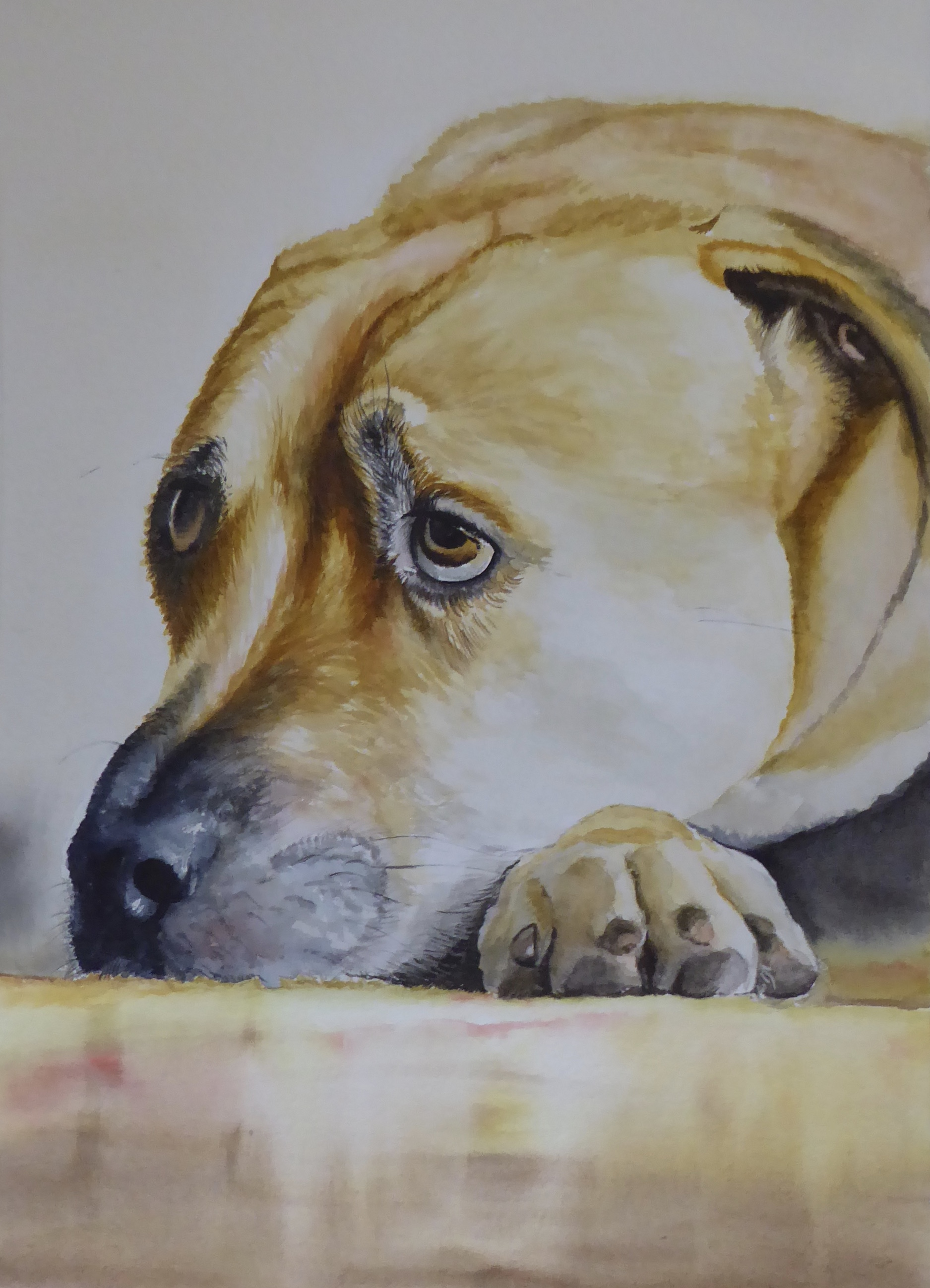 Stunning close up watercolour portrait of a dog.