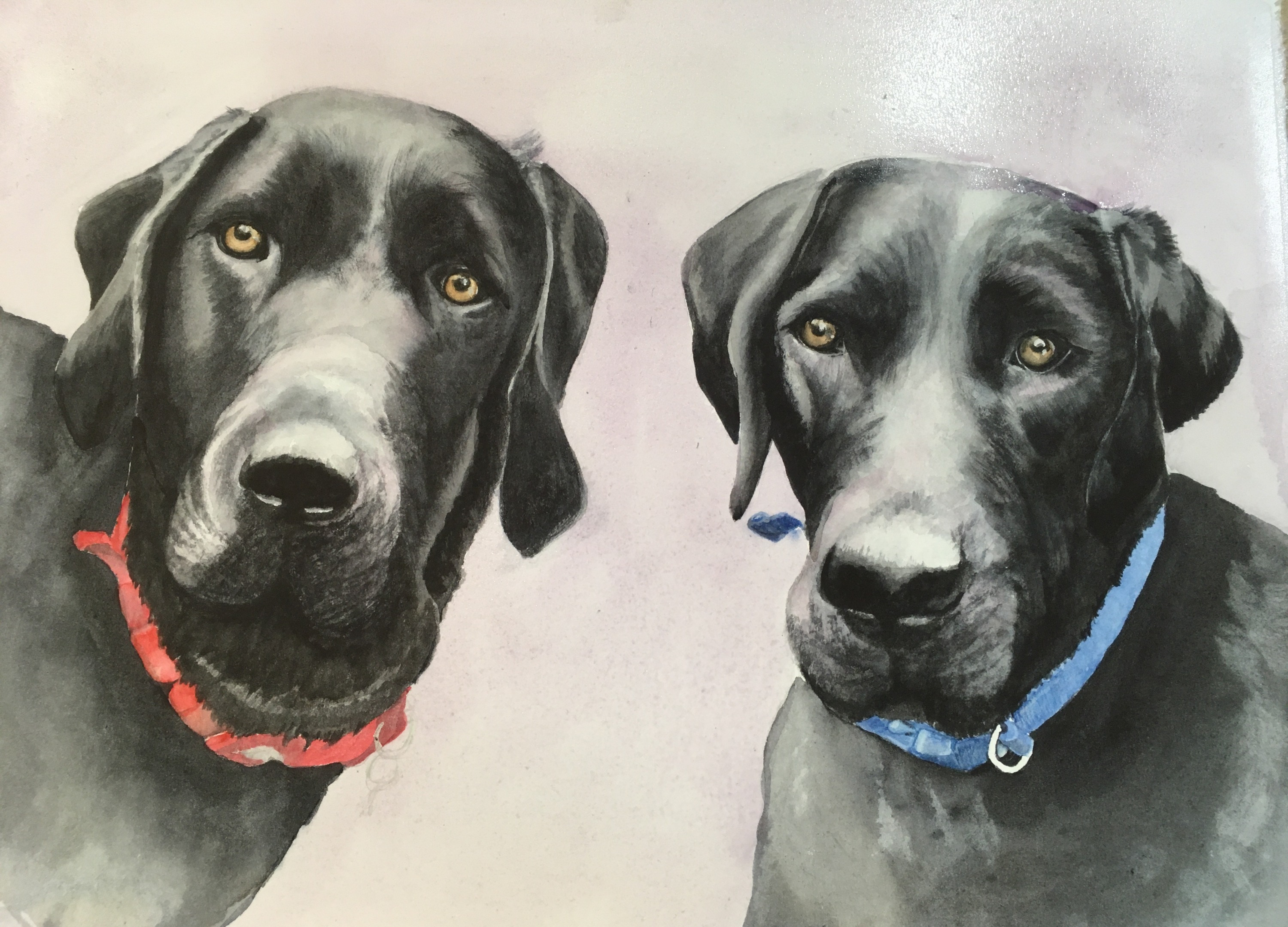 Striking watercolour painting of two black labradors