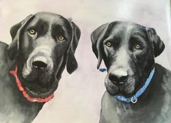 Striking watercolour painting of two black labradors