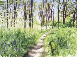 Coughton Court Bluebell Wood _