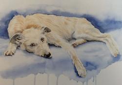 Watercolour painting of an Irish Wolfhound lounging along a sofa.