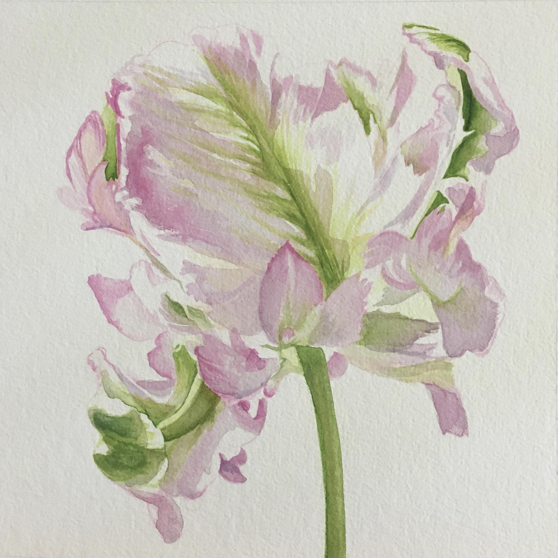 Frilled Pink Tulip