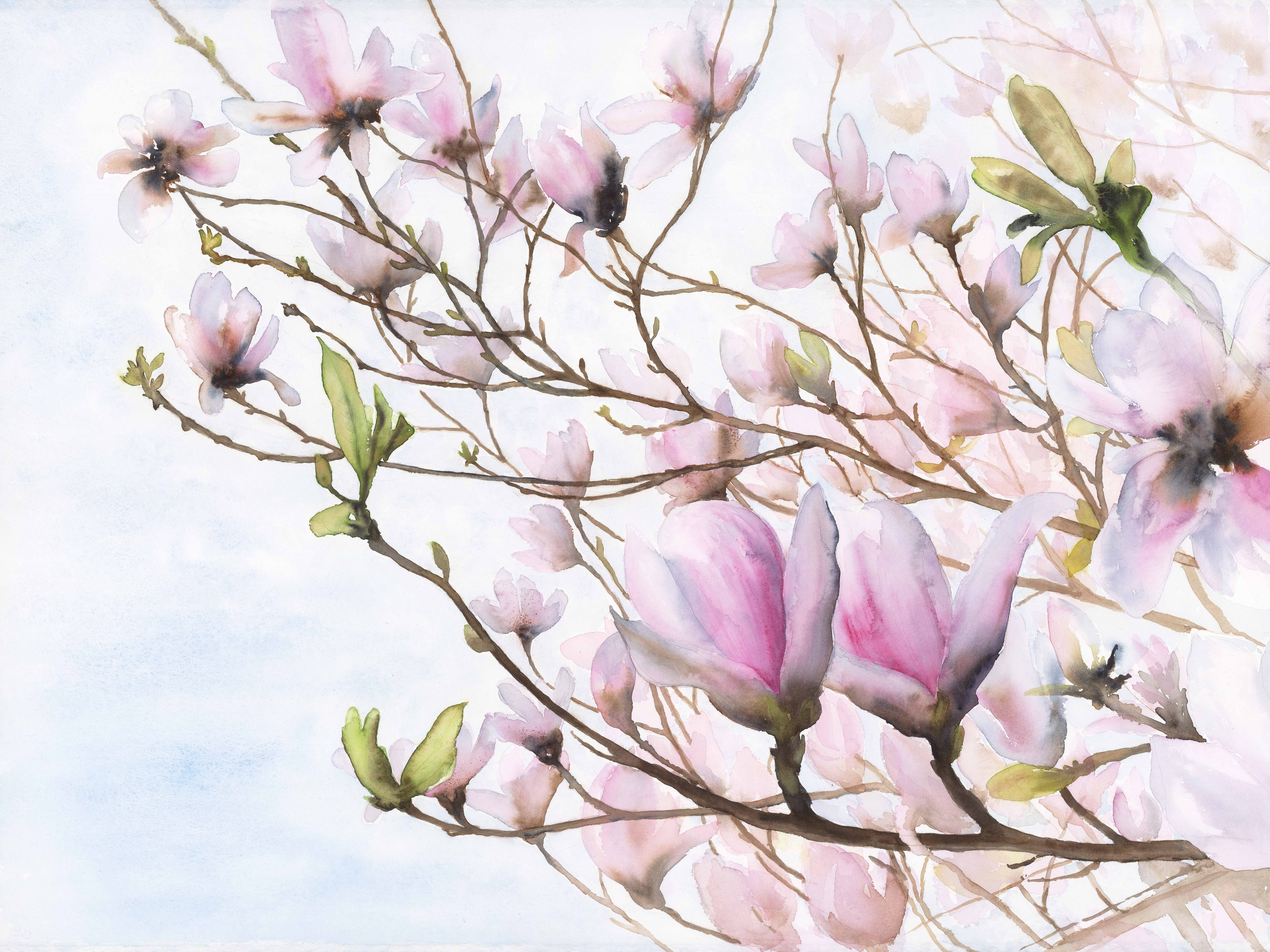 Magnolia Take Flight