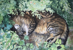 Watercolour painting of a tortoiseshell cat curled asleep under bushes.