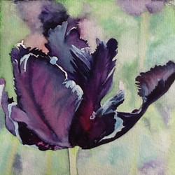 Black Tulip II