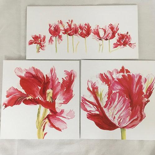 Shugborough Tulips set of 3 cards