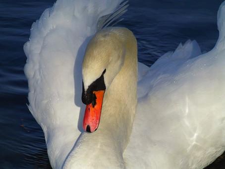 Die Vogel-Königin