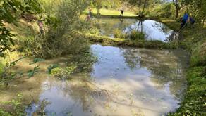 Pflege Moortelweiher