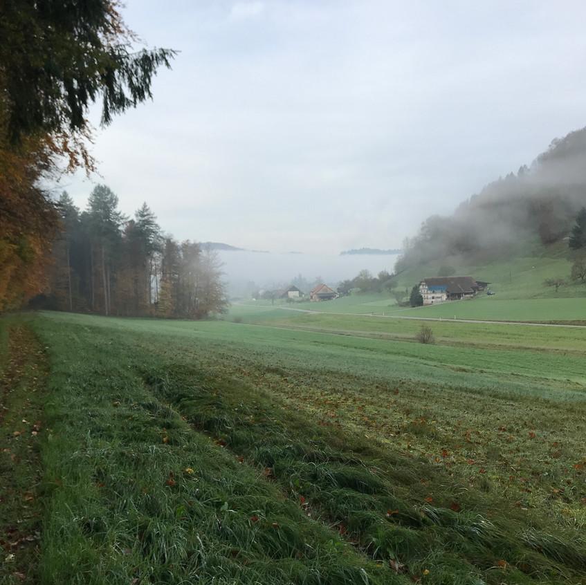 Nebel im Schürbergtal
