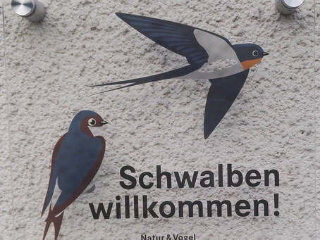 Schwalben willkommen - Schwalbenfest