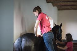Chiropraxis Pferd Illeosakralgelenk Bloc