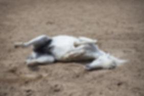 horse-2642126_1920.jpg