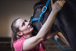 Chiropraxis Pferd Halswirbelsäule.jpg