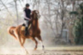 Young pretty girl riding a horse.jpg