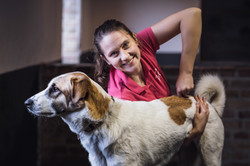 Chiropraxis Hund Wirbelsäule.jpg