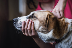 Chiropraktik Hund.jpg