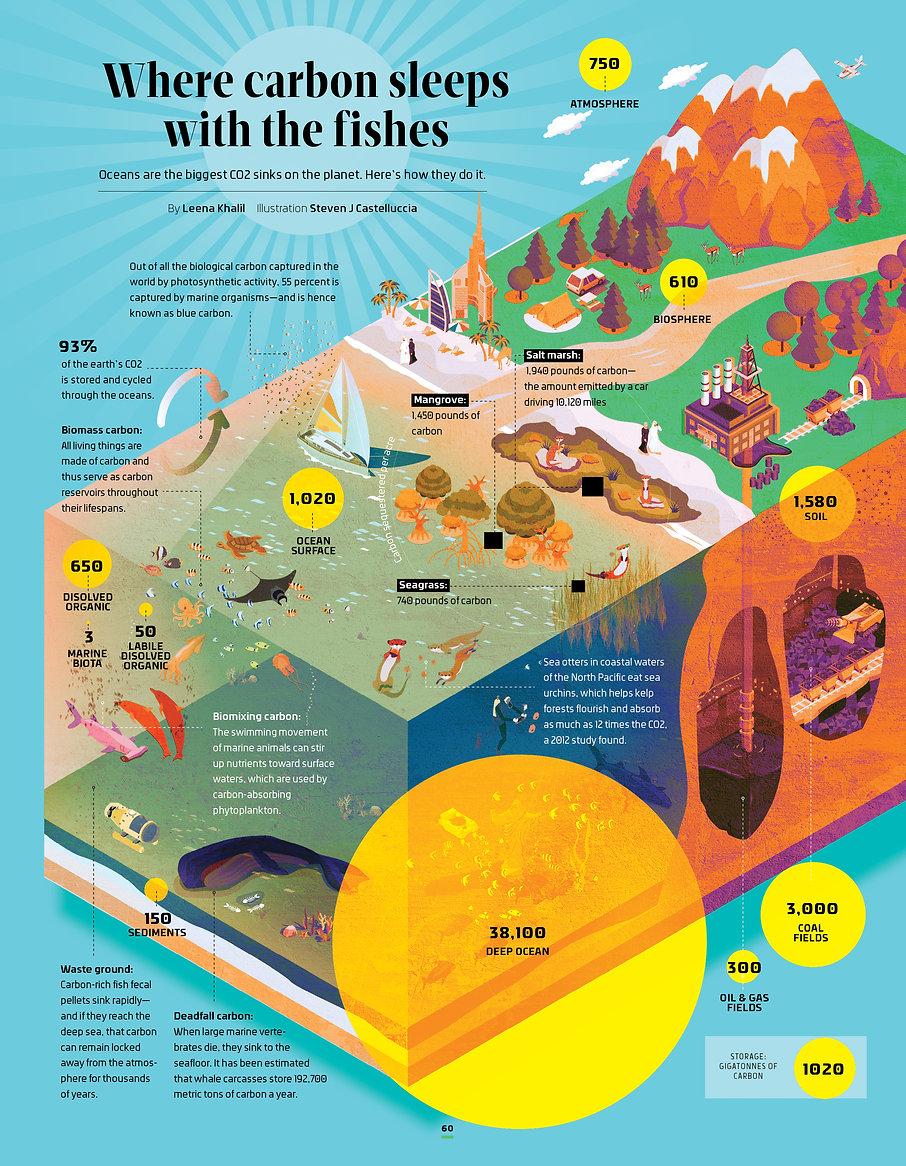 Carbon cycle2.jpg
