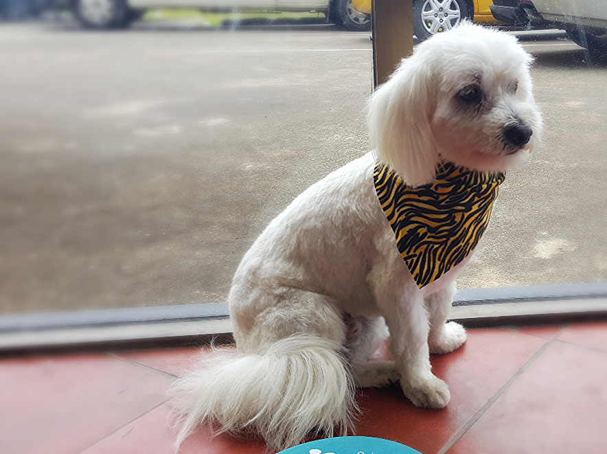 Gold Coast Dog Groomer
