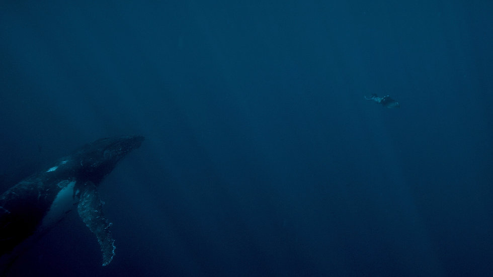 Marine-baleine.jpg
