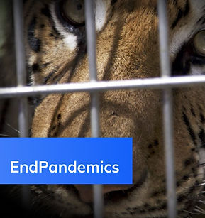 fbNews-tiger2.jpg