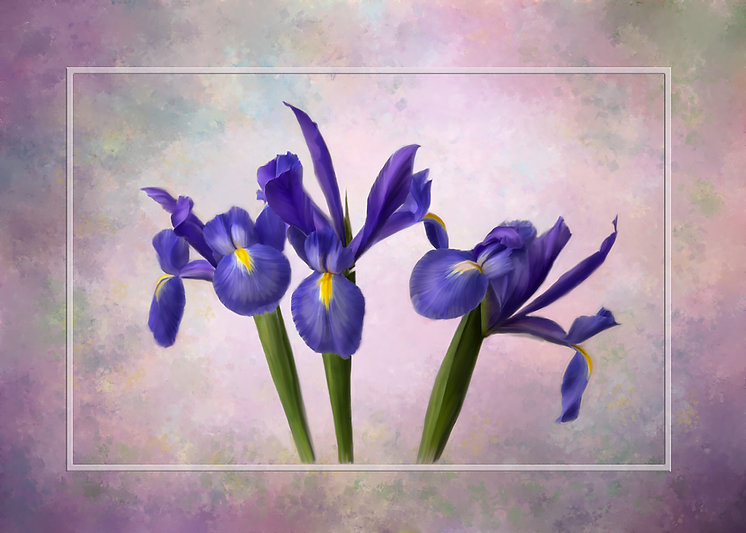 This painting is of 2 purple iris on a variegated purple background who look very happy, like they are holding their arms up and singing. This is one of my 2020 competition images.