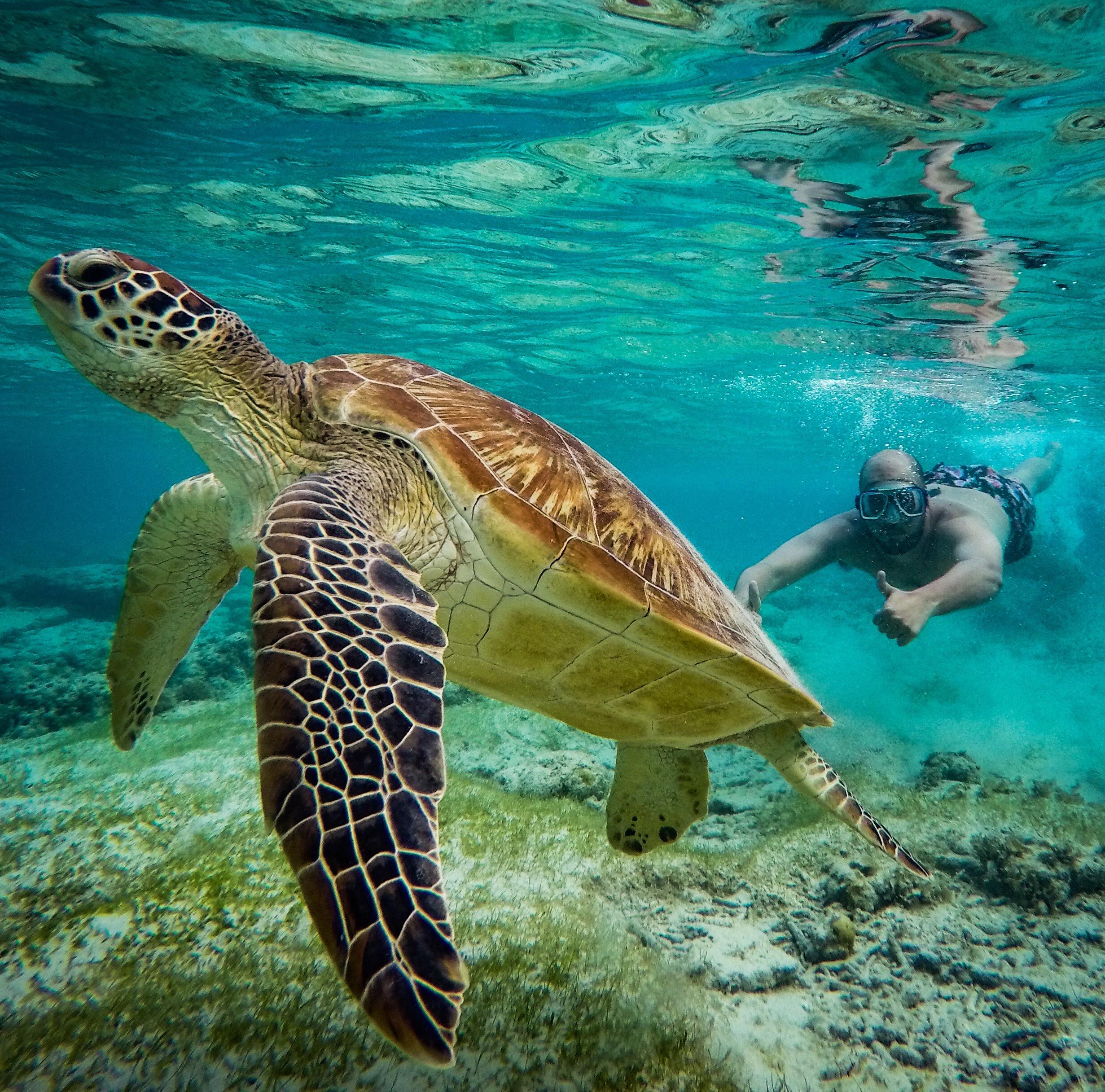 Turtle Paradise, Gili Trawangan