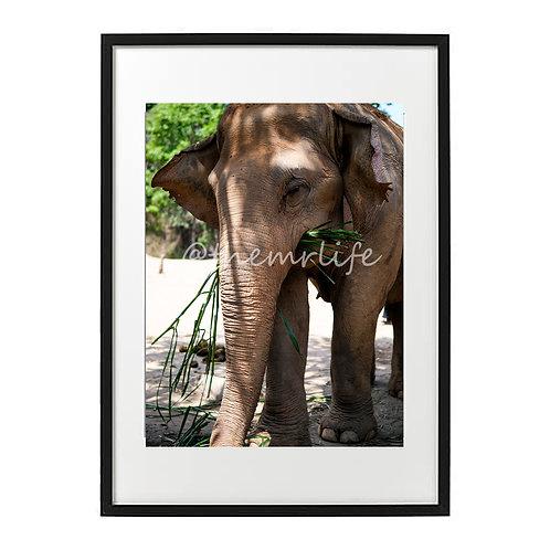 MR ELEPHANT A2 PRINT