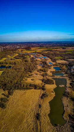 Marshes, Essex