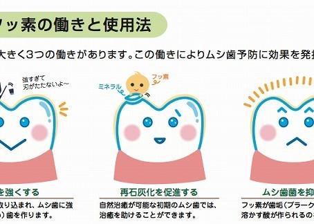 松山市の歯医者がお話しする「小児歯科」「フッ素」