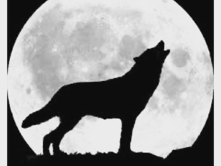 The HOWL Nightly at 7pm