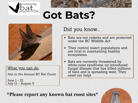 Got Bats?