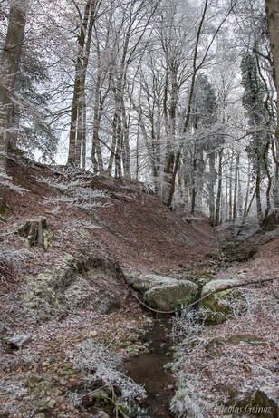 Ruisseau à Massonnens