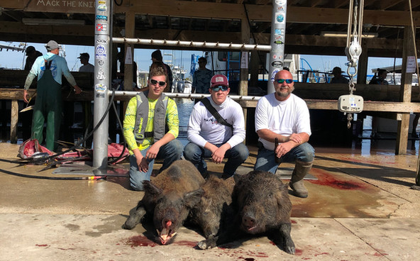 hog hunting in venice la.jpeg