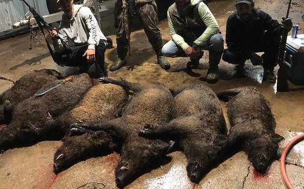 hog hunting venice la.jpeg