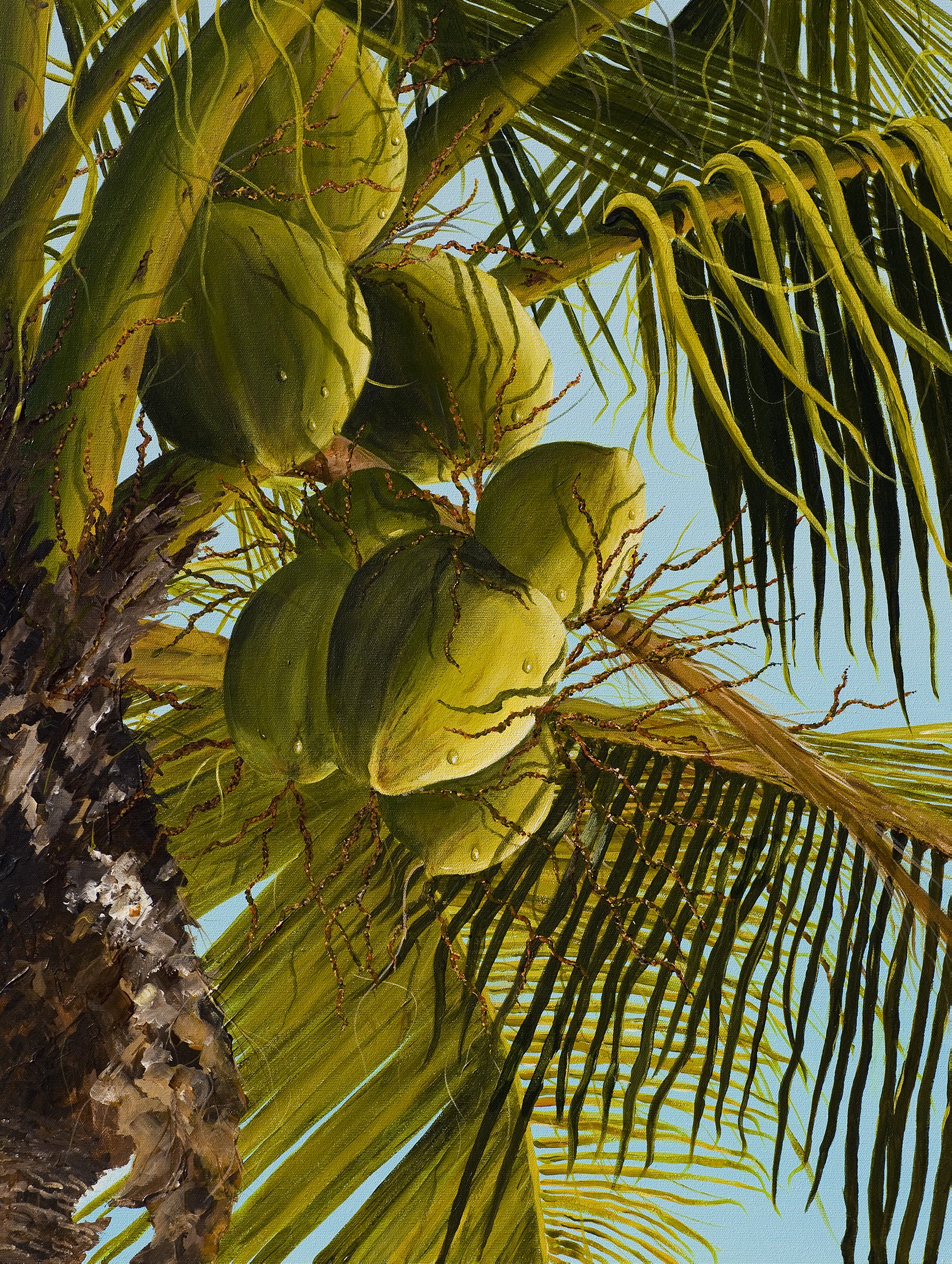 Hawaiian Coconut Palm