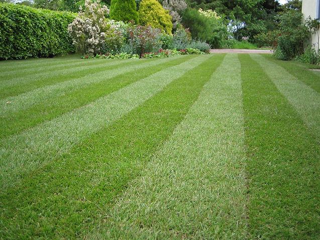 5a7a51db5cc79400010454f0_Lawn-stripey-1m