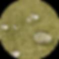 Nanotex15.png