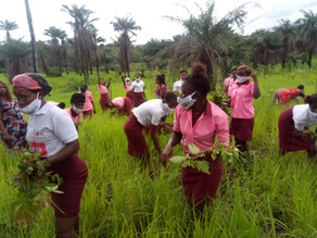 update from the KABOR Project in Sierra Leone