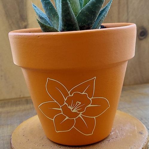 Narcisseae