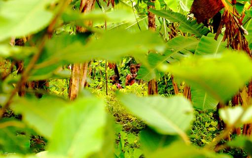 Enfants jouant dans la forêt, Gitarama, Rwanda, décembre 2010.