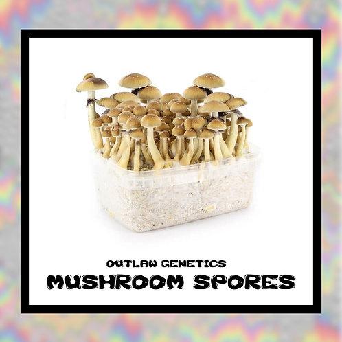 Outlaw Mushroom Spores