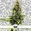 Thumbnail: Outlaw Genetics (x4 Cannabis Seeds)