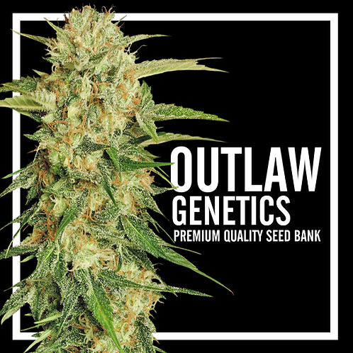 Outlaw Genetics {4 Pack}