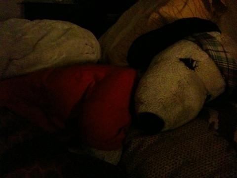The dog at sleep…